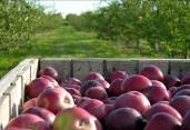 Door County Apples